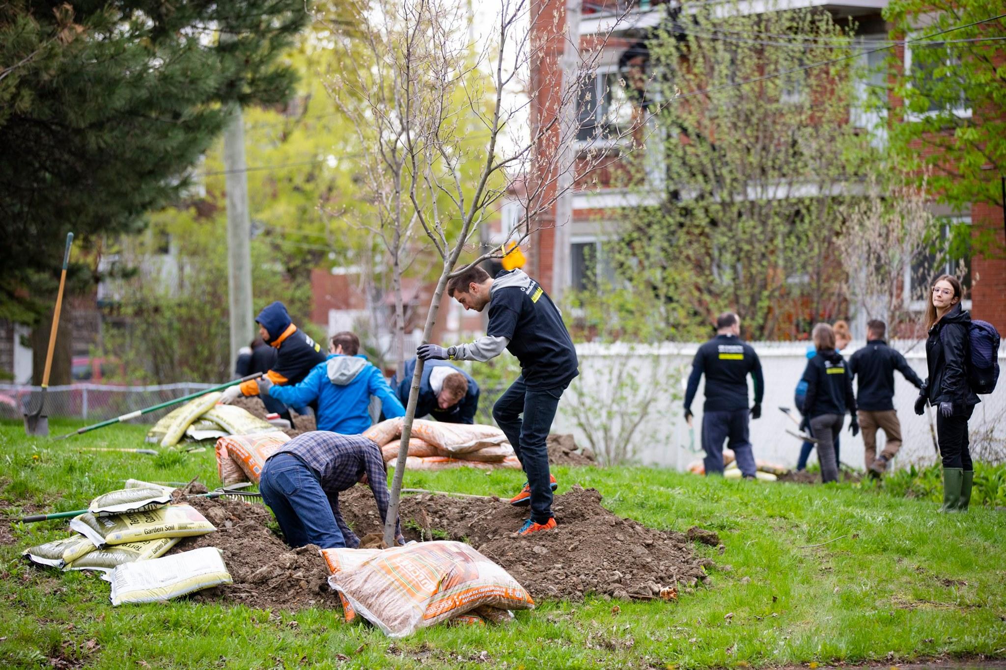 Groupe de personnes plantant des arbres sur des terrains de ville