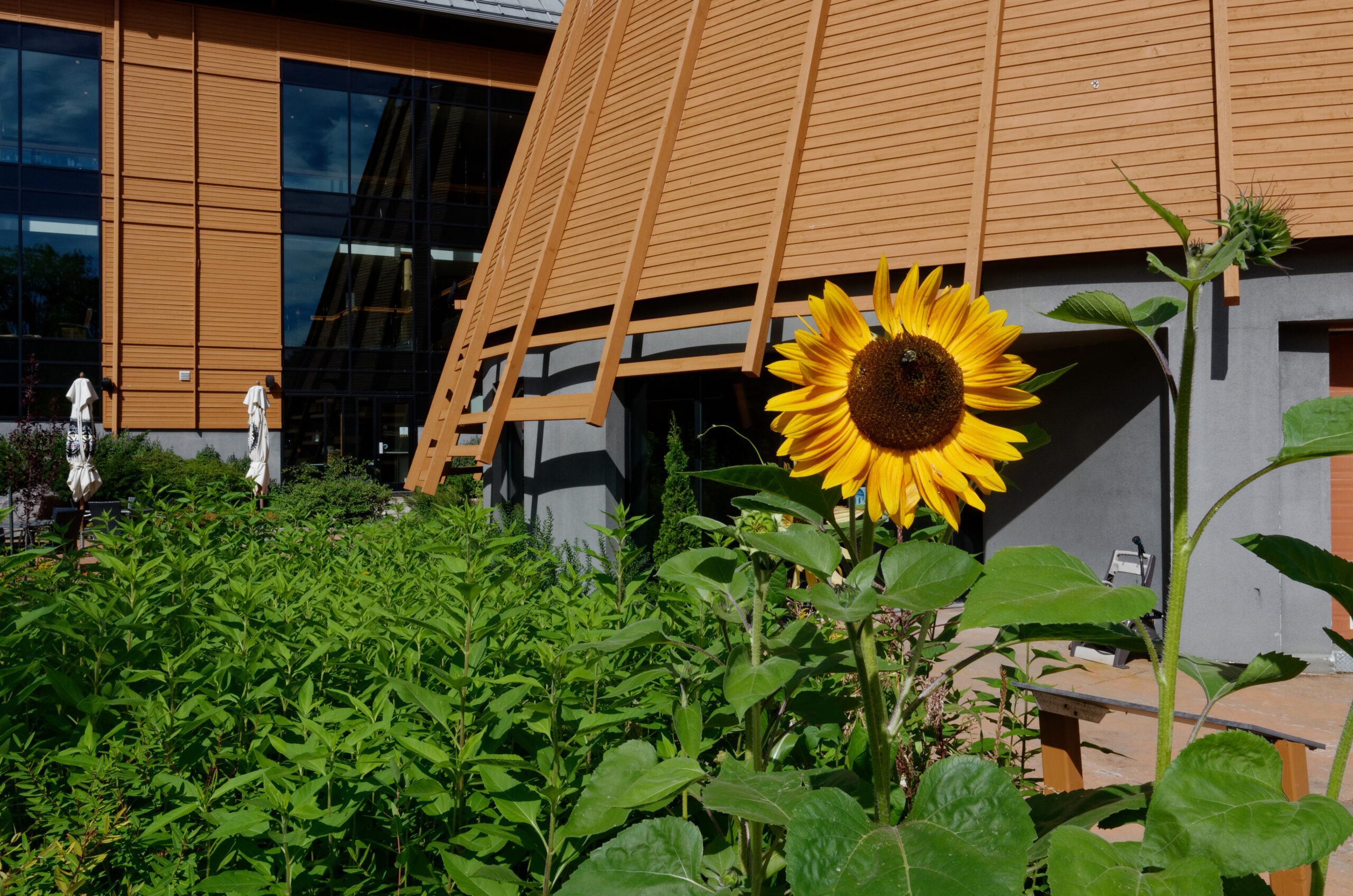 En parcourant le projet on est interpellé par la présence de certaines espèces florales. L'architecte paysagiste nous invite à nous interroger sur la raison de leur présence et leur symbolique dans la culture huronne-wendat. Une façon de proposer également un musée en plein air.